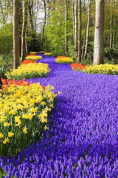 Keukenhof Flower Gardens Keukenhof Gardens Netherlands Keukenhof Gardens