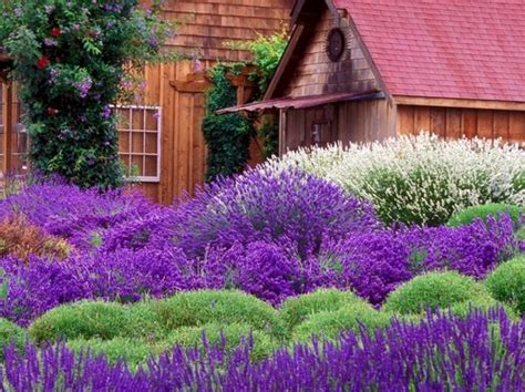 Purple Flower Garden Purple Flowers In Your Garden Www Coolgarden Me