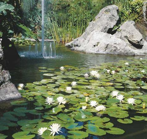 fiore di ninfea significato ninfee fiori di ninfea alba sapere it