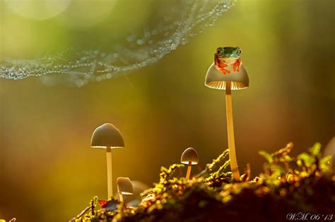 small beautiful pics small world around us beautiful miniature world of frogs