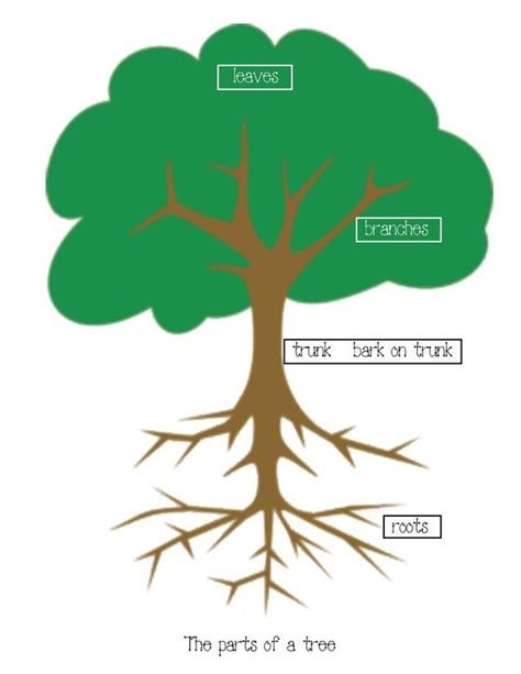 how to fell a tree in sections parts of a tree poster activity kindergarten pinterest