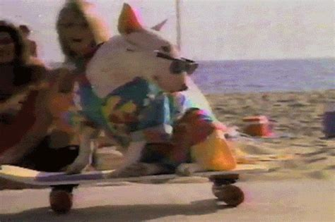 what of was spuds mackenzie who was the best 1980s animal spuds mackenzie or wolf stuff monsters like