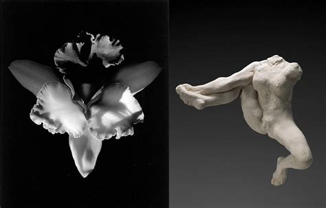mapplethorpe fiori worlds collide mapplethorpe and rodin magazine a