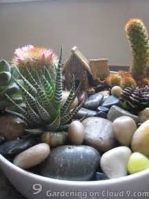 Indoor Cactus Garden Ideas Best 20 Indoor Cactus Garden Ideas On Indoor Cactus Cacti Garden And Small Cactus