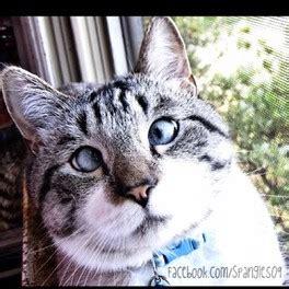 los gatos m 225 s famosos de los gatos famosos nala cat como perros y gatos