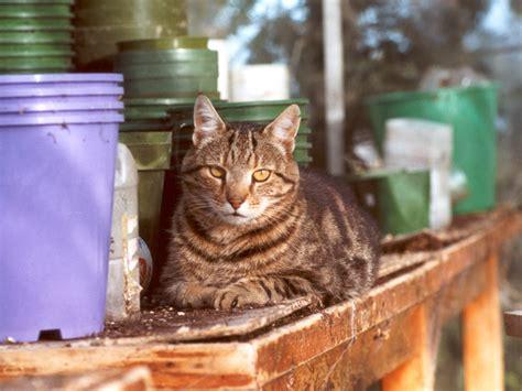 gatti in giardino gatto in giardino foto sei tutto ze 4308