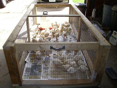 backyard brooder box building a brooder box rabbit cage combination animals