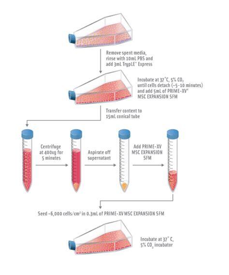 bioreactor cell culture protocol protocol for mesenchymal stem cell expansion fujifilm