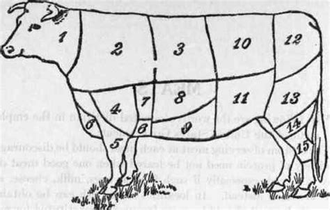 meat sections of a cow how butchery maps turn cows into territory big think