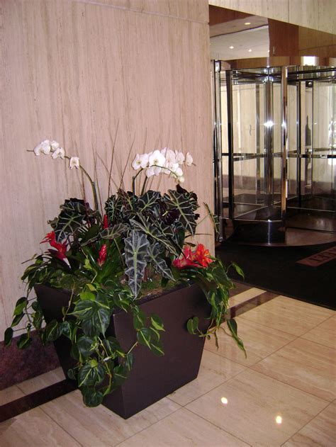 interior plant design maintenance gardeners guild sf
