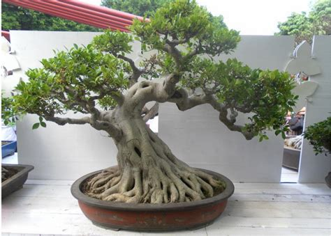 Nature Stek Harga selling bonsai tree plastic harga bonsai plastik