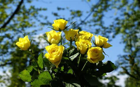 imagenes de flores orquideas y tulipanes fotos de orquideas rosas y tulipanes altisima