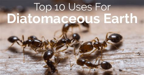 10 Uses For Diatomaceous Earth Top 10 Uses For Diatomaceous Earth Oh Lardy