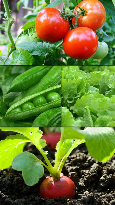 vegetable gardening in colorado planting services personal touch landscaping gardening