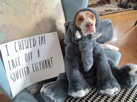 puppy shaming introducing a new member to the shaming family
