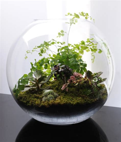 Handmade Terrariums - how to create your own terrarium