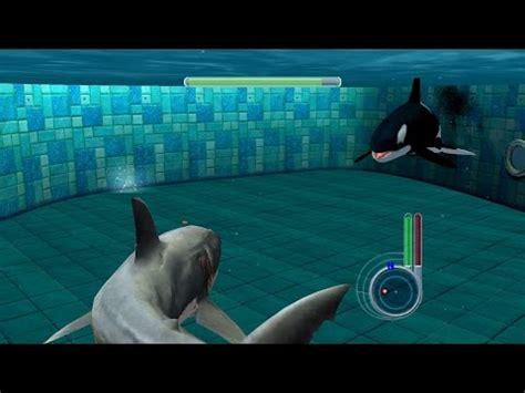 Menset Gamis great white shark vs killer whale