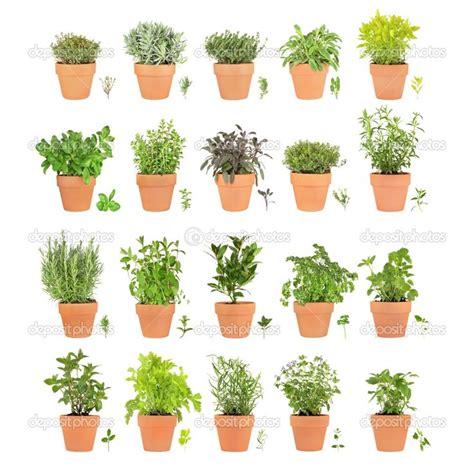 mini herb garden indoor herb garden pinterest indoor herb garden indoor herb garden pinterest