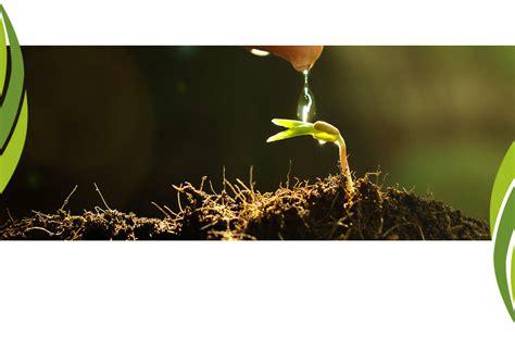 tappeti erbosi a rotoli produzione prato a rotoli e tappeti erbosi