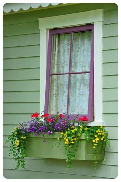 cascading flowers for window boxes cascade over the