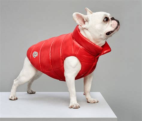 these luxury puffer jackets for dogs by moncler and poldo