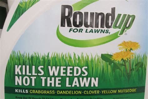 roundup for lawns roundup for lawns familiar herbicide name but new