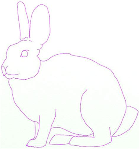 How To Draw A Hare