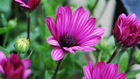 Garten Pflanzen Blaue Blüten by Die 72 Besten Lila Blumen Hintergrundbilder