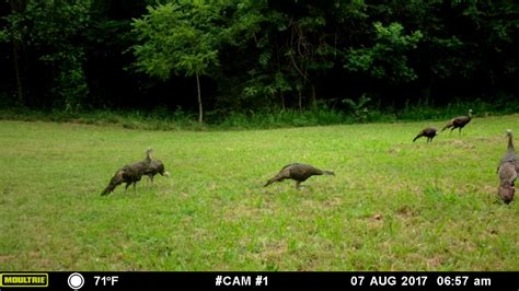 backyard cam moulyrie m 40i backyard game cam youtube
