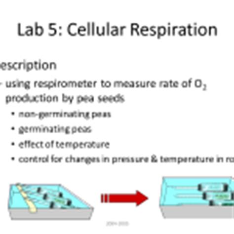 lab 5 cellular respiration 6 lab bench cellular