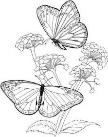 butterfly coloring pages for adults free coloring pages of butterfly