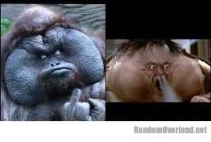 big that looks like a bornean orangutan totally looks like thunder big trouble in china