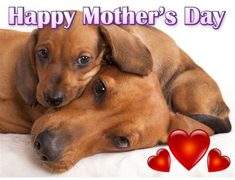day puppies happy mothers day from my paws xx and s day mothers
