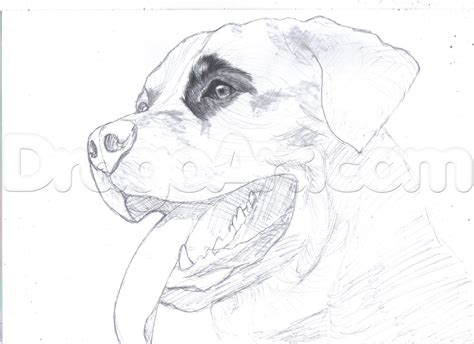 how to draw a rottweiler draw a realistic rottweiler step by step drawing sheets added by duskeyes969