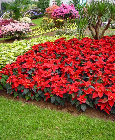plantas para jardines claves para elegir plantas para nuestro jard 237 n