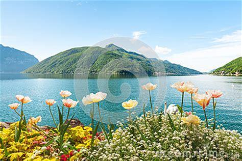 fiori lugano i fiori si avvicinano al lago con i cigni lugano