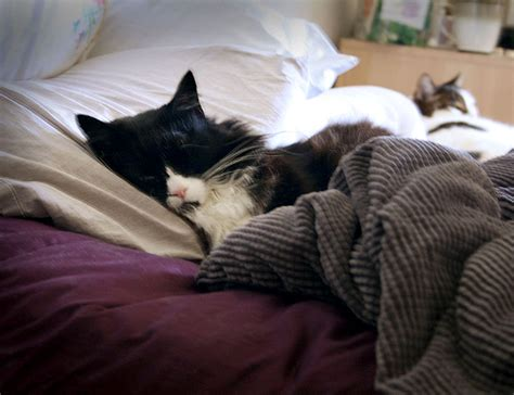 cat pooping on bed cat poops on bed 28 images to the rescue sprayed by