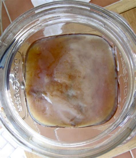 How to Make a Kombucha Scoby | Spoonful of Sugar Free Healthy Kombucha Scoby