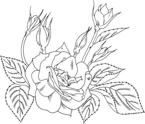 yellow rose coloring page charisma yellow red floribunda rose coloring page