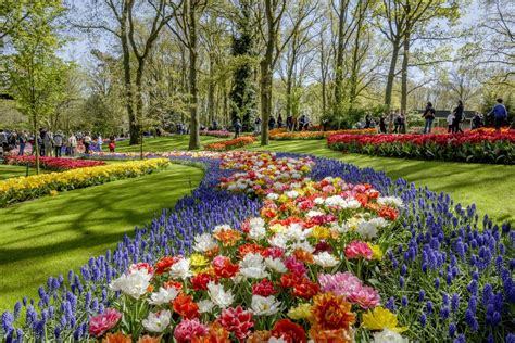 parco fiori olanda keukenhof garden tour on a bed of tulips
