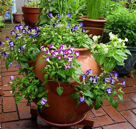 strawberry planter ideas flower suggestions for strawberry pots
