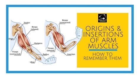 libro muscle origins and insertions hayley bergman
