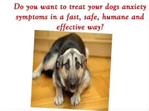 how to treat anxiety in dogs separation anxiety in dogs get dan s help to treat your anxiety symptoms