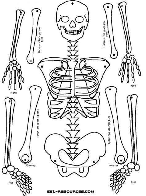 25 Best Ideas About Human Skeleton For Kids On Pinterest Human Skeleton Coloring Pages