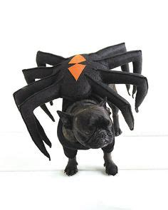 black pug spider costume spider pet costume disguised herself as a devious black widow spider