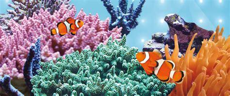 Lu Tl T5 14 Watt By Union juwel aquarium led blue