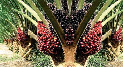 kelapa sawit indonesia dipromosikan ke swiss gimni