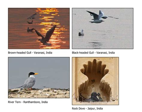 the travels of birds our birds and their journeys to strange lands classic reprint books birds of india and bhutan