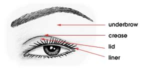 how to apply eyeshadow diagram you ve got style how to apply eyeshadow correctly