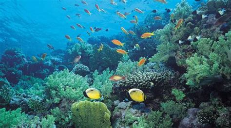 imagenes medicas ucsd biologia marina